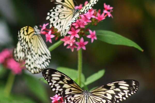 Butterfly Rainforest